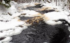 река Кулисмайоки