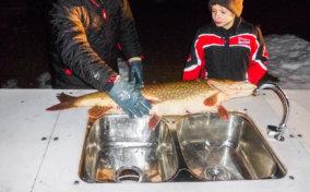 стол для разделки рыбы