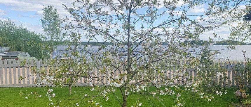 Зацвели деревья